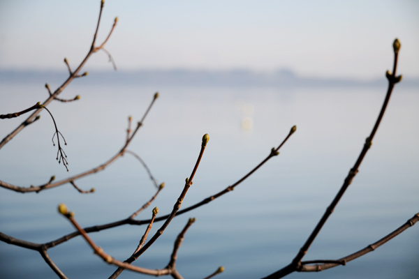 Au bord du lac de Neuchâtel